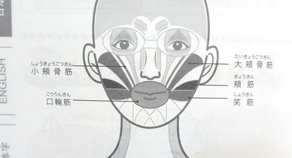顔の筋肉の図